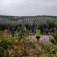 Celebrada la Ruta de Senderismo Malnacido-Viñas (Santaella)